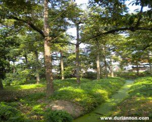 สภาพสวนทเุเรียนในจังหวัดนนทบุรี
